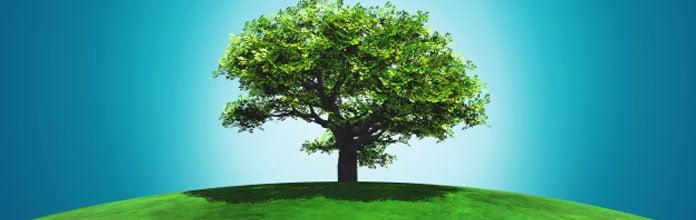 estilo-de-vida-que-respeita-natureza-economia-de-agua-alimentos-organicos-e-uso-de-lavanderia-bonasecco